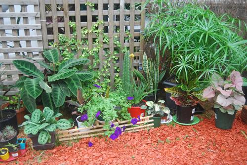 Plants Flowers Indoor Plants