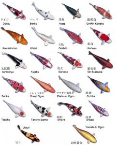 Koy fish names