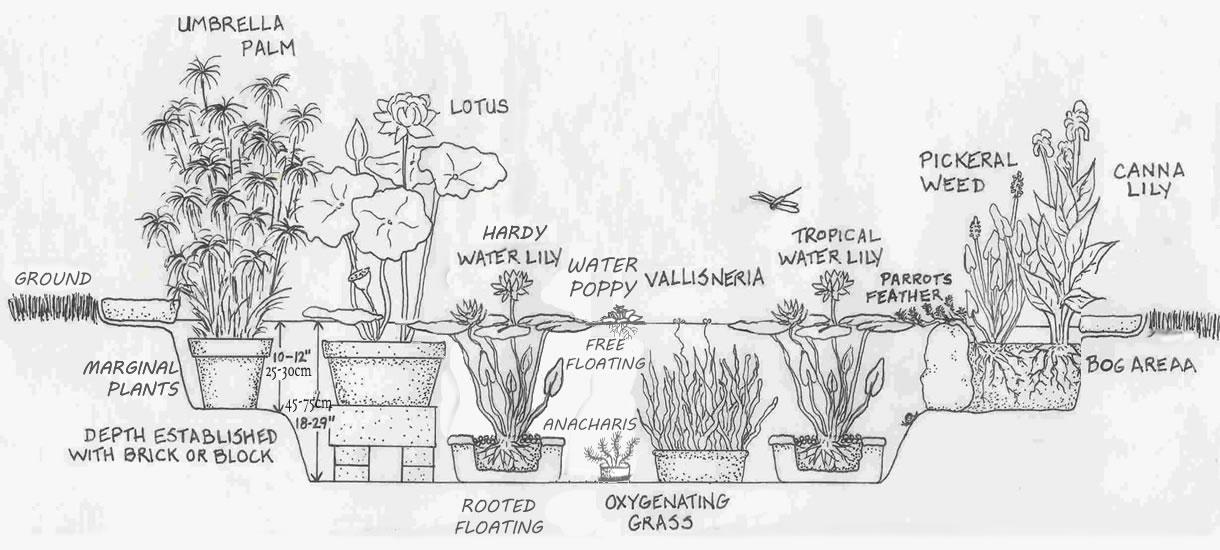 Plants Database
