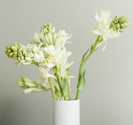 How To Decorate With Houseplants furthermore Bonsai From Cuttings further Flower Types further Tuberose as well Names Of Orchids. on types of orchids and their care