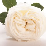 Rose Jeanne Moreau
