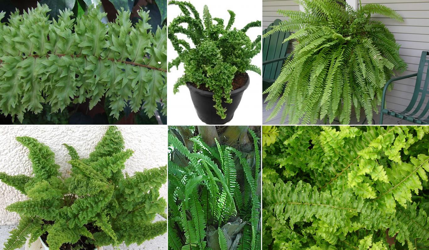 plants u0026 flowers sword fern