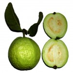 Psidium guajava fruit