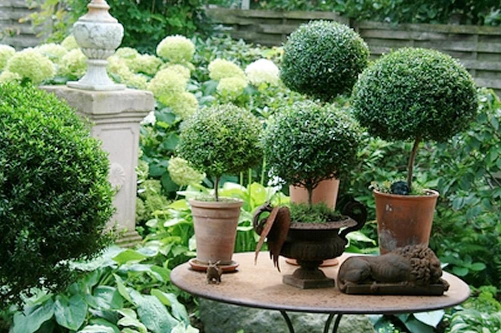 Plants Flowers Myrtus Communis