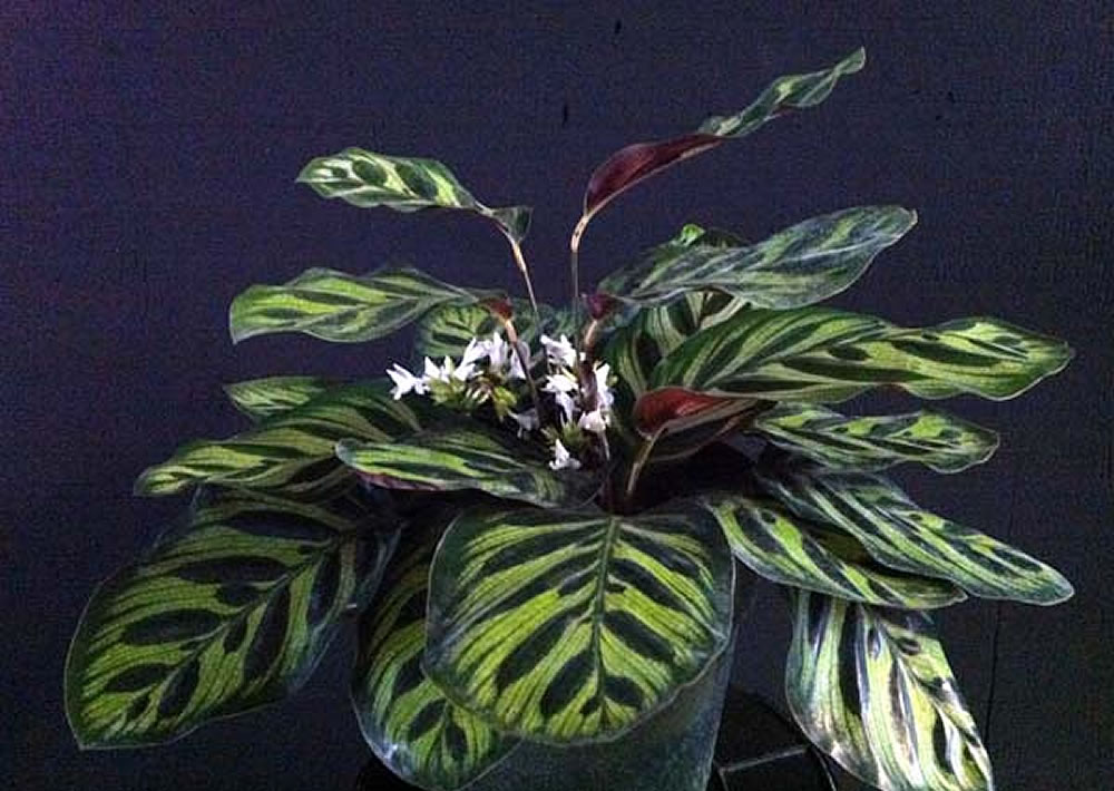 Small Ornamental Grasses With Purple Flowers Plants & Flowers &...