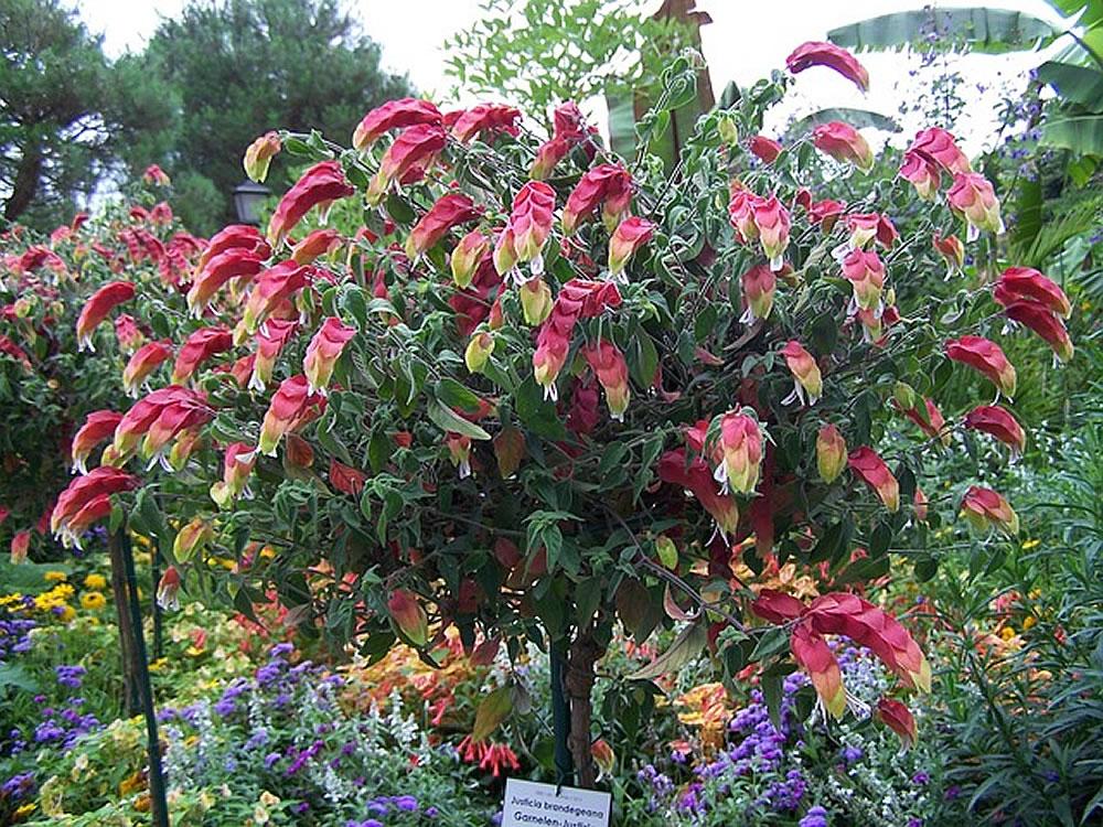 Philodendron Xanadu Flower
